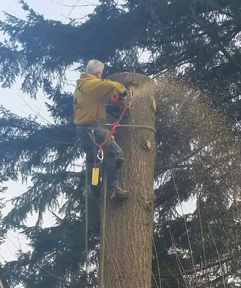 About Alpha Tree Care in Vancouver WA and Camas WA