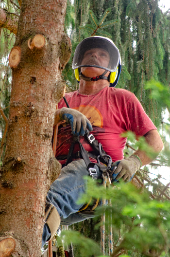 Alpha Tree Care, LLC in Vancouver WA